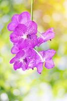 linda orquídea rosa
