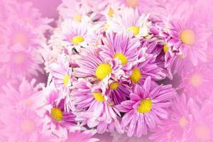 flores rosa, brancas e amarelas, close-up foto