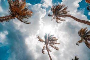coqueiros na baía de maracas