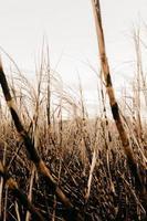 campo de grama marrom foto