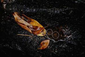 duas alianças de casamento ao lado de folhas marrons molhadas