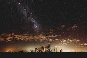 silhueta de plantas sob a noite estrelada
