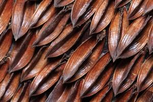 semente de girassol foto