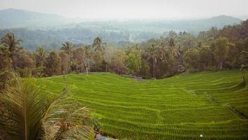 campos de arroz em bali foto