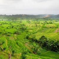 Campos de arroz foto
