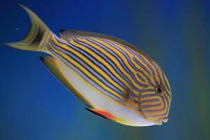 peixe 9 foto