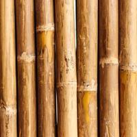 parede de bambu foto