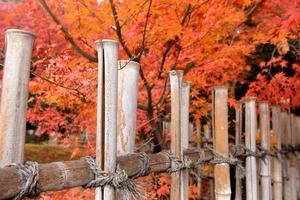 fundo colorido de cerca feita à mão de bambu