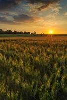 pôr do sol sobre um campo de trigo foto
