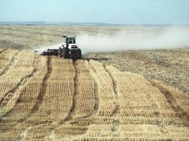 mietitura di grano