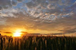 pôr do sol de verão sobre um campo