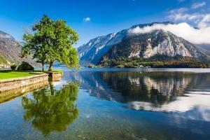 única árvore em um fundo de montanhas em Hallstatt foto