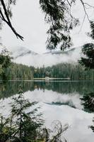árvores verdes ao lado de um corpo de água calmo foto