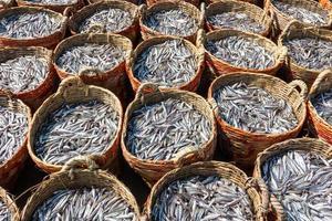cestos de anchovas