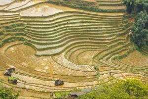 curva em terraços de arroz na vila de tavan sapa. foto