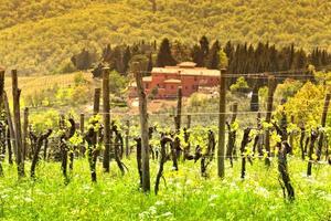 Chianti-vineyard