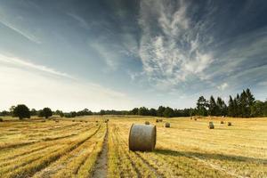 fardos de feno no campo do pôr do sol foto