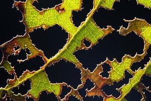 folha verde em fundo preto foto