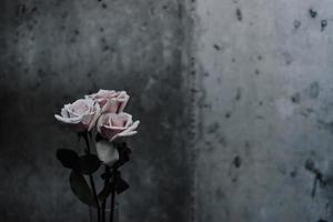 fotografia de foco seletivo de rosas cor de rosa ao lado de parede de concreto cinza