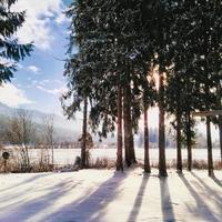 nascer do sol através das árvores e neve foto