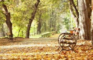 banco de madeira no parque outono foto