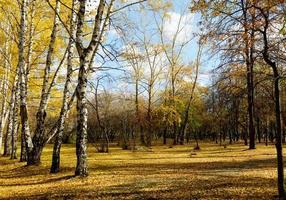 parque de outono foto