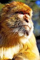 cedro da áfrica em marrocos foto