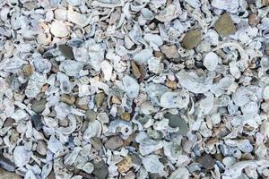 conchas e seixos à beira-mar foto