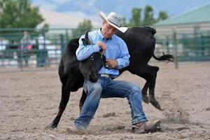 cowboy lutando contra um novilho foto