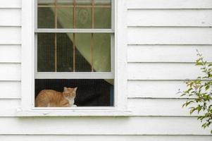 gato na janela foto