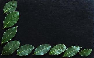 folhas de louro em fundo de ardósia foto