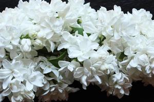 fundo de flores lilases brancas foto