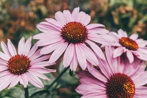 flores roxas em lente tilt shift