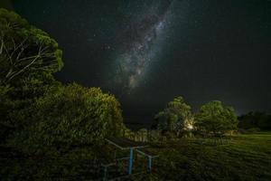 árvores verdes sob a noite estrelada