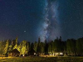 árvores verdes sob o céu azul com estrelas durante a noite