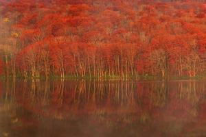 árvores vermelhas e verdes ao lado do corpo d'água