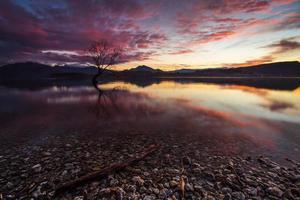 árvore solitária de wanaka ao nascer do sol # 4 foto