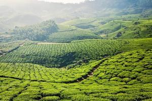 plantações de chá verde em munnar, kerala, índia