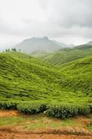 plantações de chá munnar índia