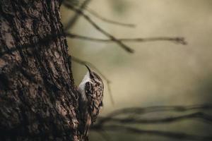 pássaro no tronco de uma árvore
