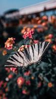 linda borboleta pousando em flor no jardim