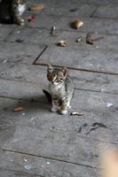 gatinho malhado marrom foto