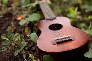 ukulele no chão foto