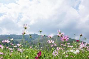 campo de flores no verão