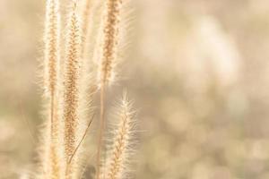 fundo natural com flores de grama