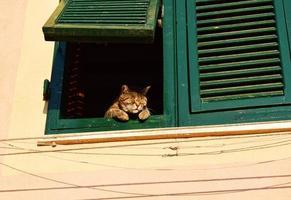gato malhado marrom dormindo em janela ensolarada foto