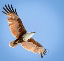 pássaro voando foto