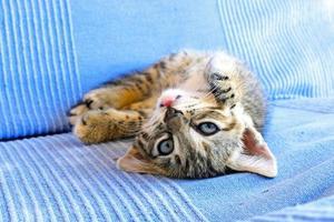 gatinho fofo no sofá foto