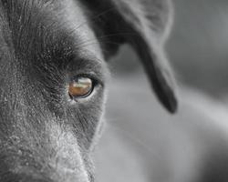 close-up de cara de cachorro preto