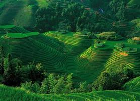 terraços de arroz longsheng com vista foto